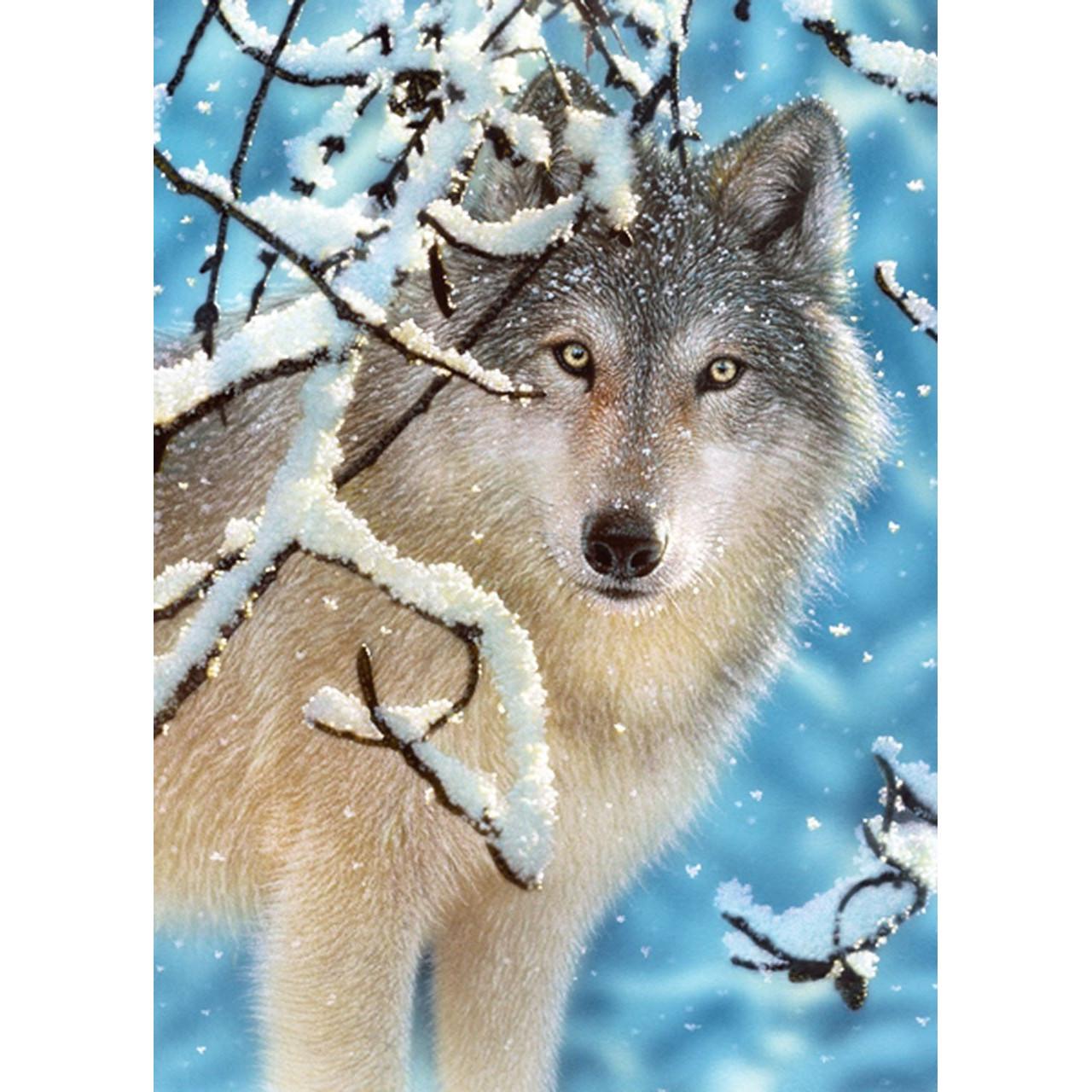 Открытке, волк открытка