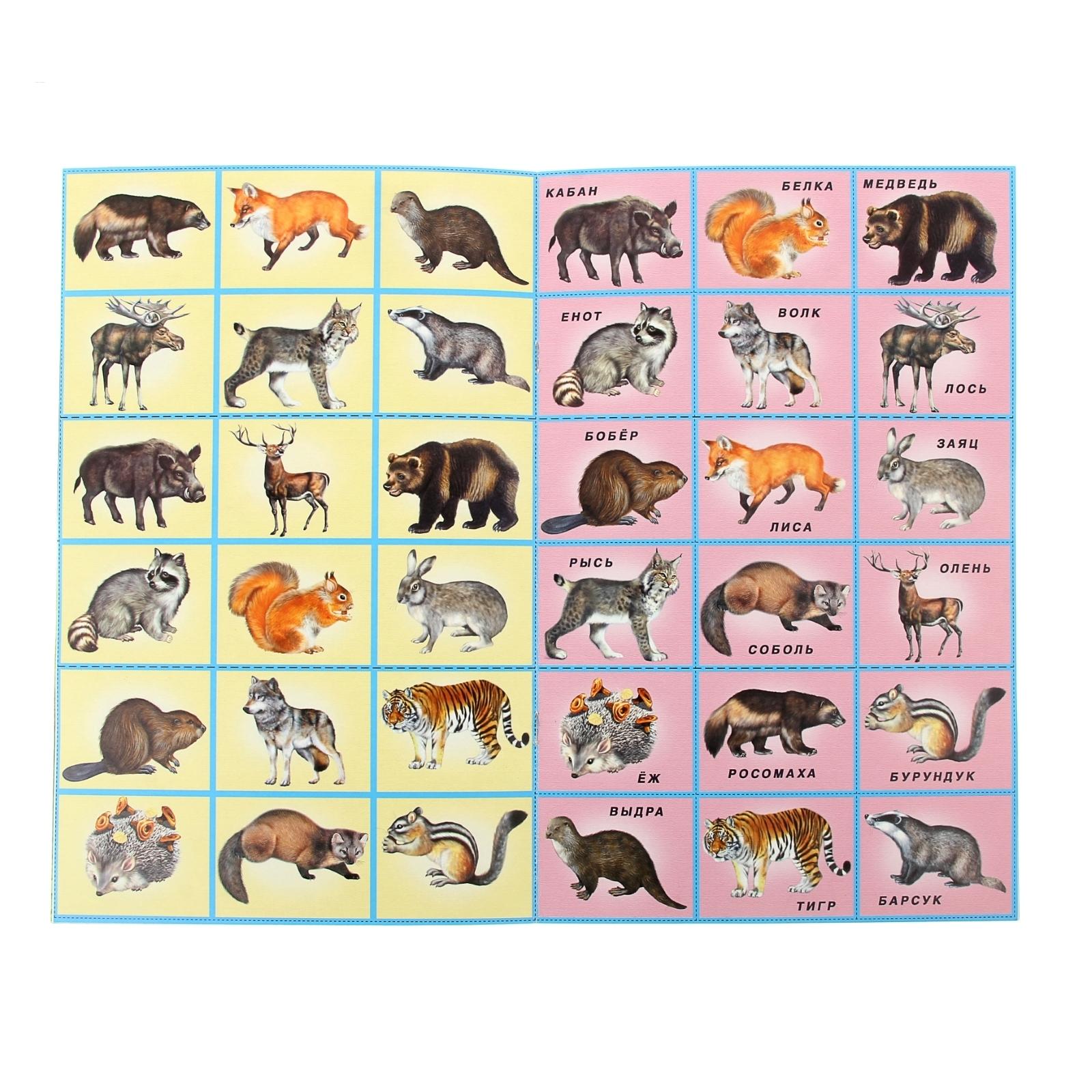 картинки диких и домашних животных с описанием серия полностью соответствует