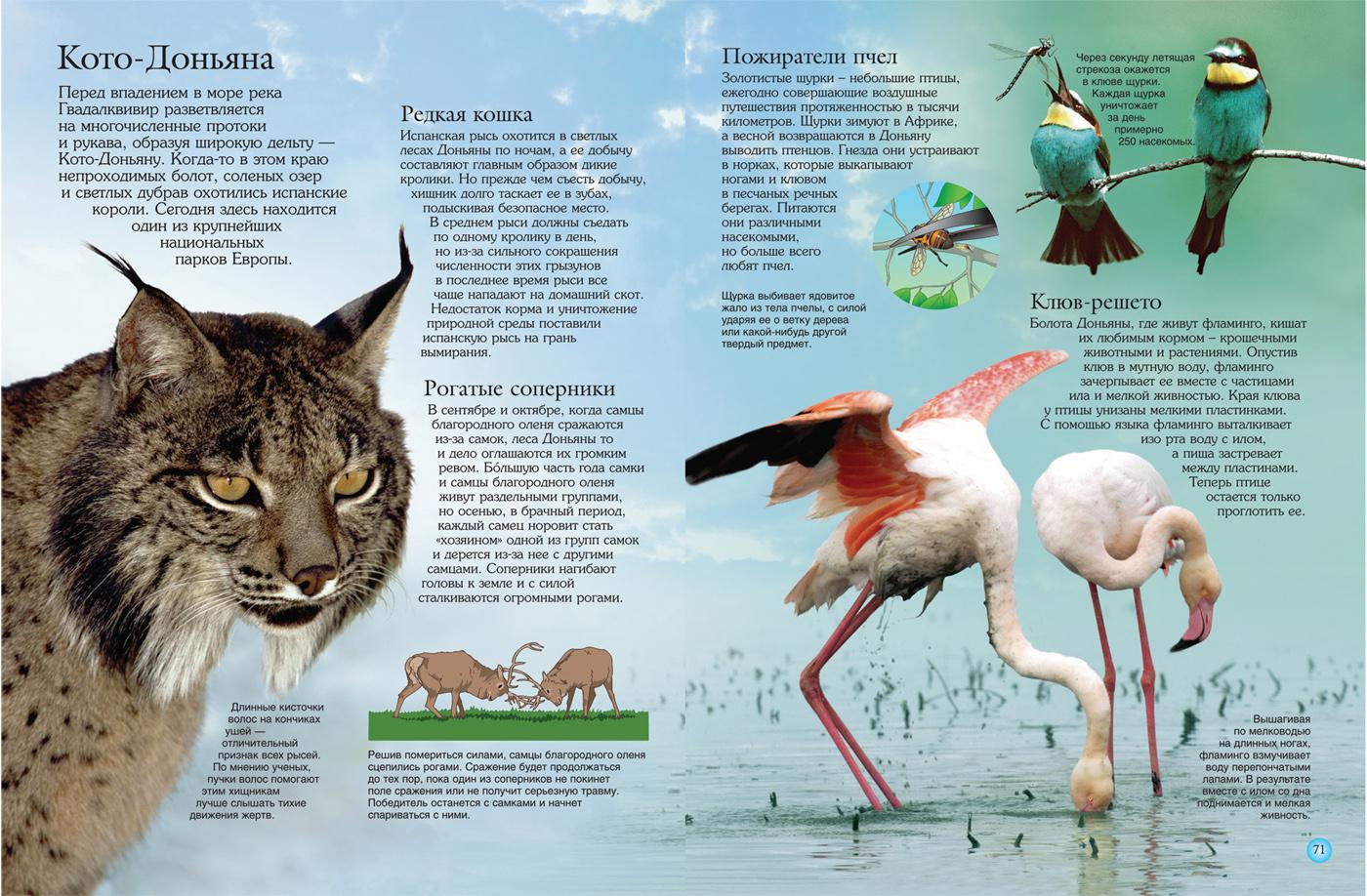 интересные факты о животных с картинками