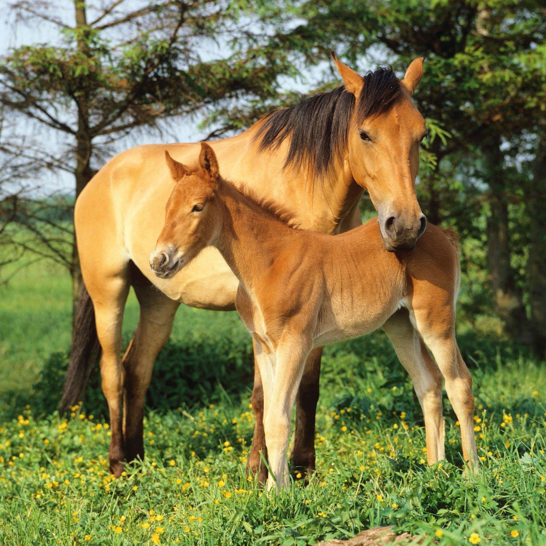 Свадьбой текст, картинки про лошадь для детей