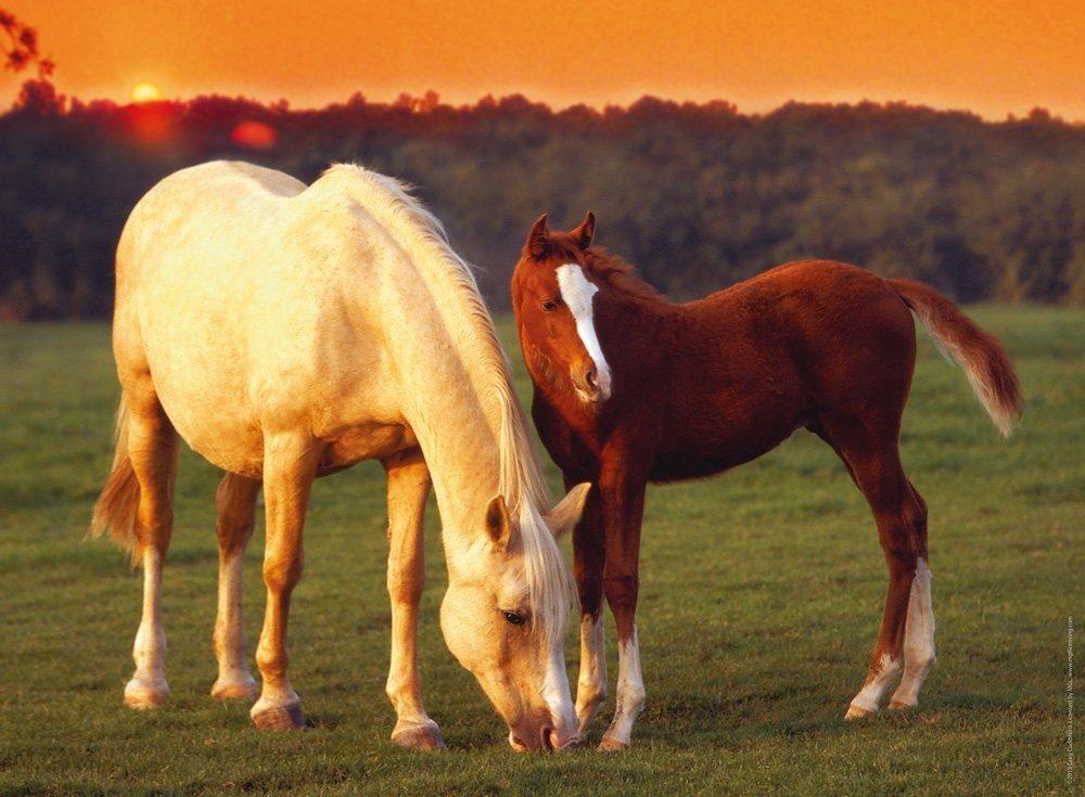 Картинка с изображением лошади, новым годом картинках